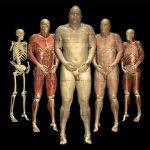 可见人类的不同解剖状态